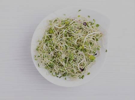 Nutrition : Graines germées et pousses - Apprendre à cultiver des graines germées, riches en nutriments |