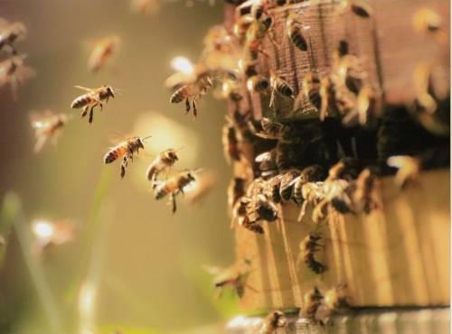 Ruche, abeilles et produits apicoles - Comprendre le fonctionnement d'une ruche en ligne |