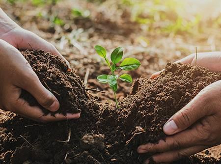 Vie du sol et fertilité - Comprendre tout ce qu'il se passe dans le sol en ligne |