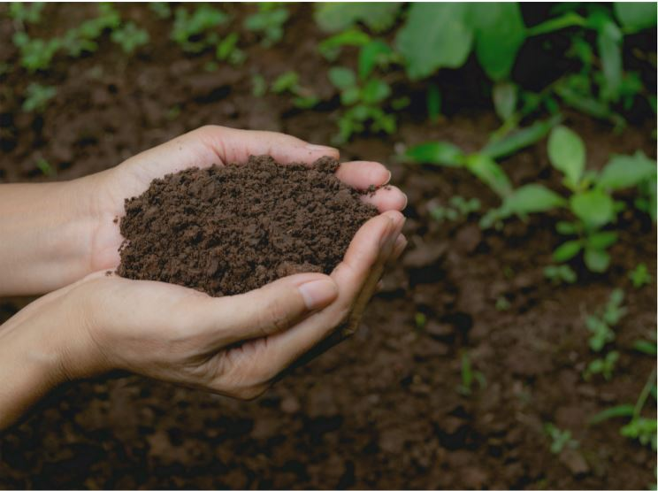 Pédogenèse : La formation des sols