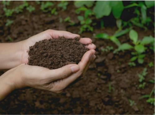Pédogenèse : La formation des sols - Comprendre d'où vient le sol en ligne |
